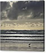 Seagull At Cannon Beach Canvas Print