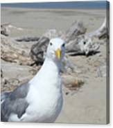 Seagull Bird Art Prints Coastal Beach Driftwood Canvas Print