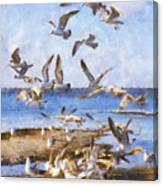 Seagull Convention Canvas Print
