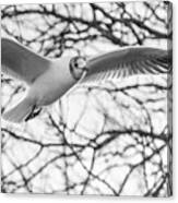 Seagull Fly By Trees Canvas Print