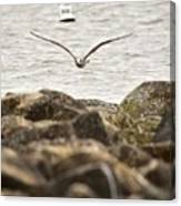 Seagull Flying Into Ocean Jetty Canvas Print