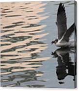 Seagull Fun Canvas Print