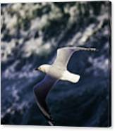Seagull In Wake Canvas Print
