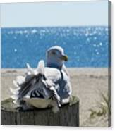 Seagull In Wind Canvas Print