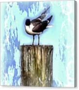 Seagull - Laughing Gull Pop Art  Canvas Print