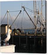 Seagull Morro Bay California Canvas Print