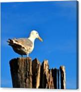 Seagull On A Dock 2 Canvas Print