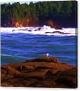 Seagull On Rock Canvas Print