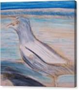 Seagull  On Seashore Canvas Print