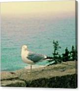 Seagull On Stone Wall Canvas Print