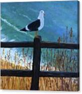 Seagull On The Fence Canvas Print