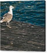 Seagull On The Pier Canvas Print