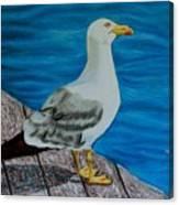 Seagull On The Shore - Gaviota En La Costa Canvas Print