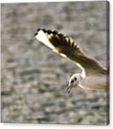 Seagull Over Water Canvas Print
