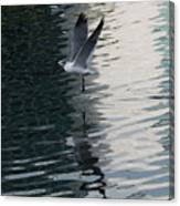 Seagull Reflection Over Blue Bay Canvas Print