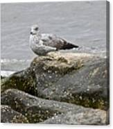 Seagull Sitting On Jetty Canvas Print