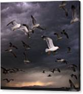 Seagull Storm Canvas Print