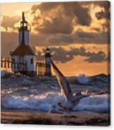 Seagull Takeoff - Tiscornia Beach  Canvas Print