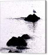 Seagull Waiting Canvas Print