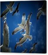 Seagulls Above Canvas Print