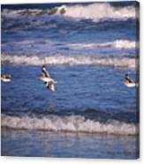 Seagulls Above The Seashore Canvas Print