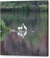 Seagulls At Lake Canvas Print