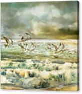 Seagulls At Sea Canvas Print