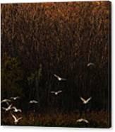 Seagulls In Flight Canvas Print