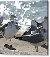 Seagulls In The Cold Sun Canvas Print