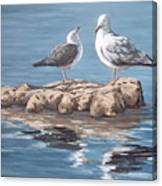 Seagulls In The Sea Canvas Print