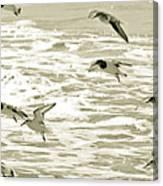 Seagulls Landing Tampa Florida Canvas Print