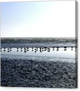 Seagulls On A Sandbar Canvas Print