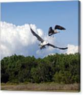 Seagulls Over Marsh Canvas Print