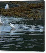 Seagulls-signed-#9360 Canvas Print