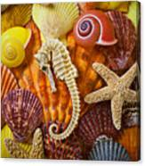 Seahorse And Assorted Sea Shells Canvas Print