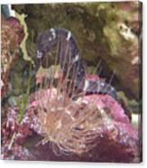 Seahorse1 Canvas Print