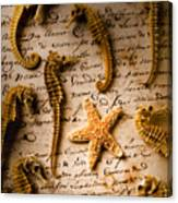 Seahorses And Starfish On Old Letter Canvas Print