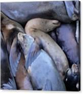 Seal Buddies Canvas Print