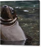 Seal In The Water Canvas Print