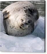 Seal On Iceberg Canvas Print