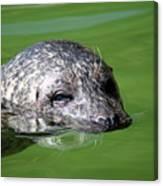 Seal Swimming Portrait Wildlife Scene Canvas Print