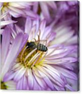 Searching Honey Canvas Print