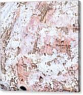 Seashell Abstract Canvas Print