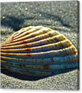 Seashell After The Wave Canvas Print