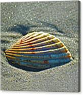 Seashell After The Wave Square Canvas Print