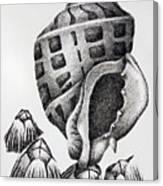 Seashell And Barnacles Canvas Print