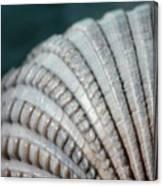 Seashell Designs Canvas Print
