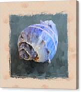 Seashell IIi Grunge With Border Canvas Print