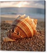 Seashell In The Sand Canvas Print