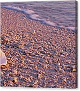 Seashell On The Beach, Lovers Key State Canvas Print